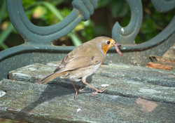 6426_Early Bird_Phillip White