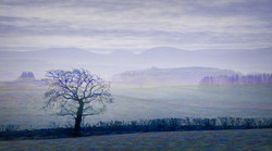 4331_Colour Flow_John Reed