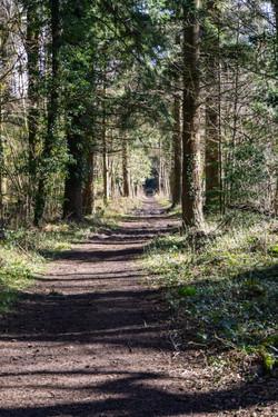 Woods 2_Tim Parmley