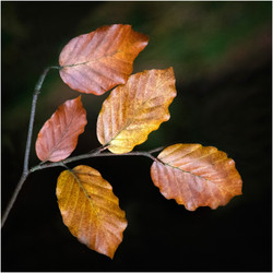 Mitchell, David_Autumn Leaves