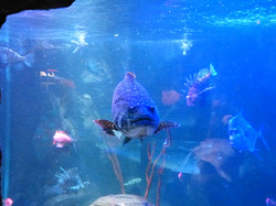 Blue Fish_Martin Riley