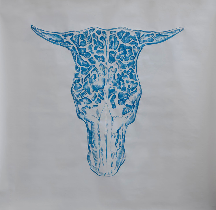 The Frontal Sinus of an Ox