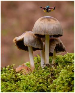 0975_Freak Of Nature_Anthony Johnstone