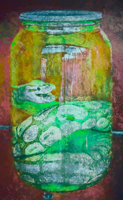 John Reed_Snake In A Jar