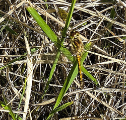 2678_Stick Insect_Martin Riley
