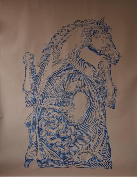 L'Anatomia del Cavallo