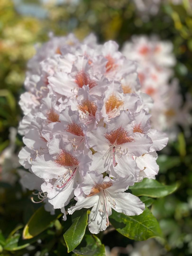 Flower 6_Martin Riley