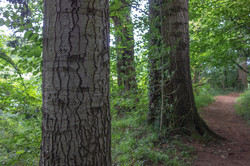 Brace of trees_Tim Parmley