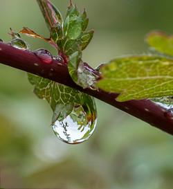 Dew Drop_Ian Gregory
