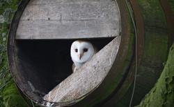 3459_Bird In A Barrel_Steve Jeffrey