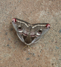 Butterfly or  Moth 2_Martin Riley