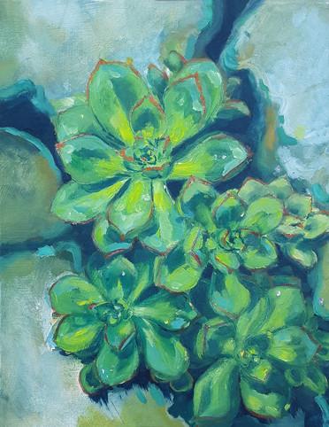 Esalen Succulents