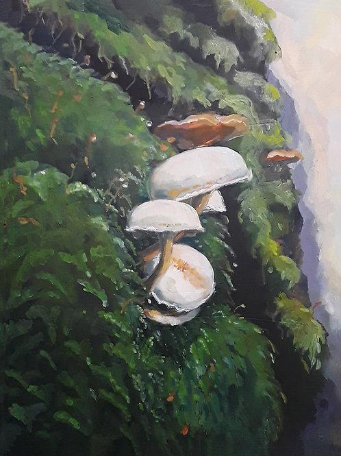 Elyn Mushrooms