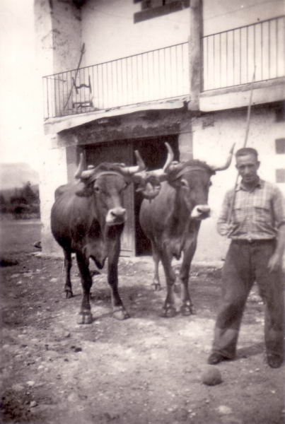071.- 1961 aprox. - Venancio con las vacas