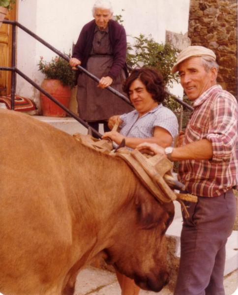 125.- 1972 aprox. - Unciendo las vacas