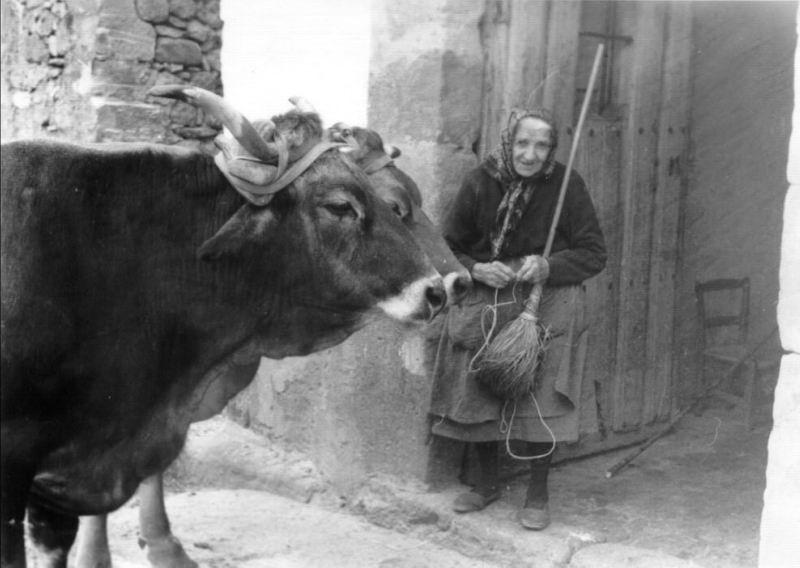 102.- 1970 aprox. - Abuela Jesusa con las vacas