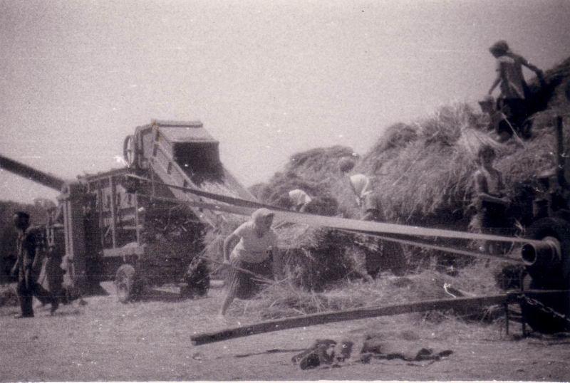 077.- 1963 aprox. - Trillando en Cubillos
