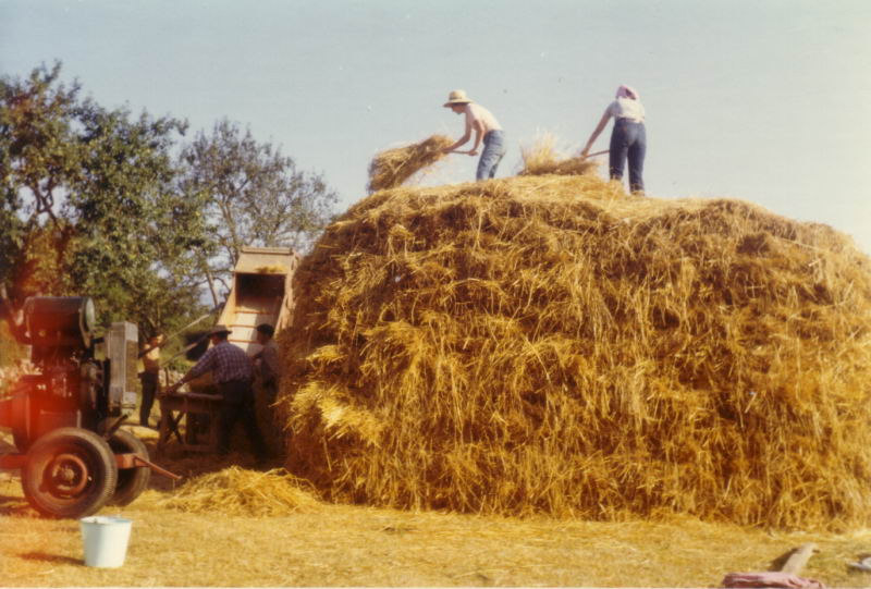 115.- 1971 - Trilladora