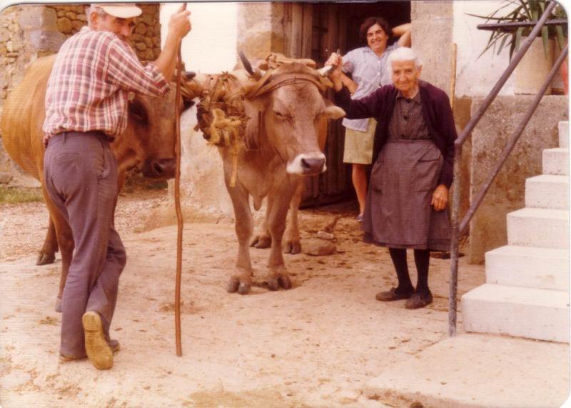 126.- 1972 aprox. - Unciendo las vacas