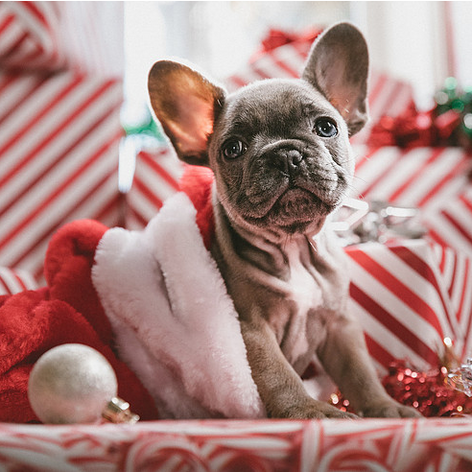 The Top Holiday Email Marketing Tips for 2019
