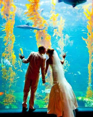 Birch Aquarium at Scripps.jpg