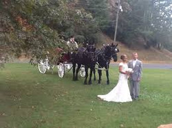 Four Star Wedding Carrage Ride
