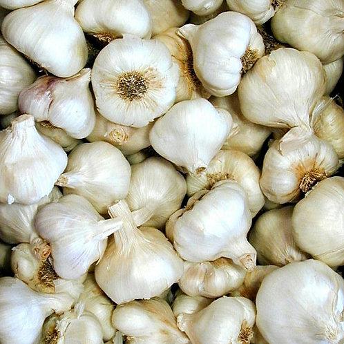 Garlic (20lbs)