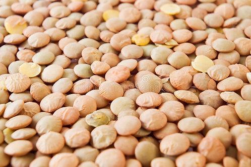 Lentil Bean (50lbs)