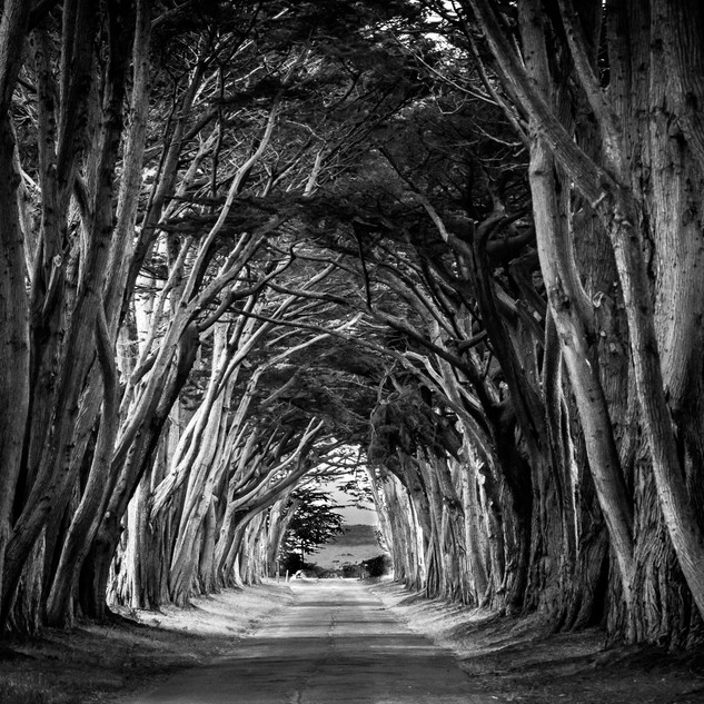 CYPRESS TUNNEL .jpg