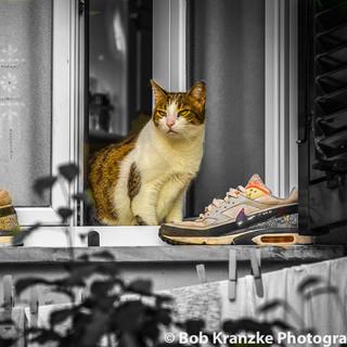 CAT IN THE WINDOW.jpg