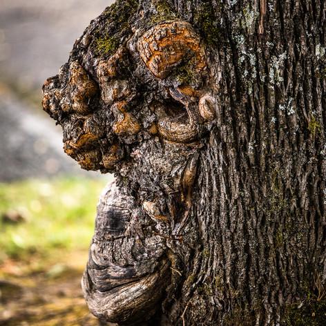 GORILLA TREE.jpg