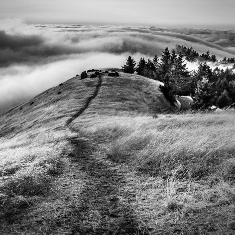 OUT OF THE FOG..jpg