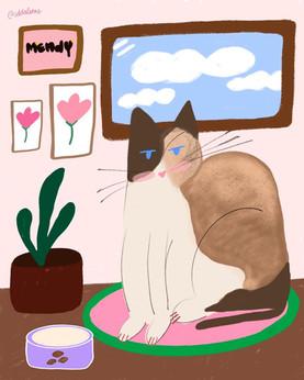 Mendy, the almond cat.