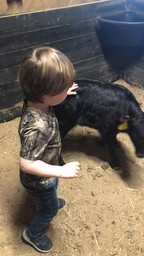 Mason with the calf