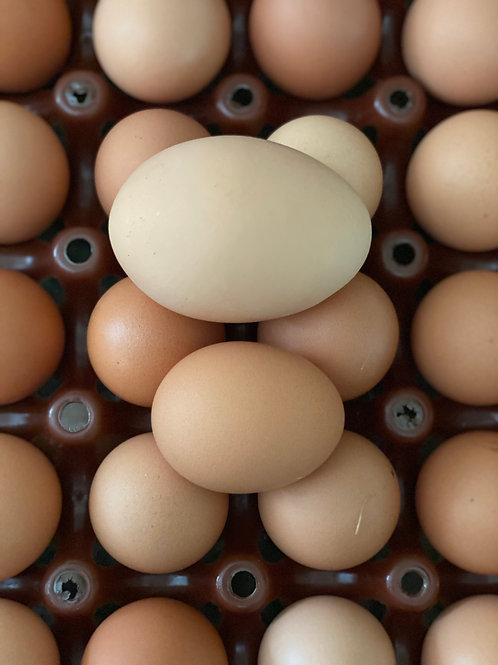 20 Dozen Pasture-Raised eggs (CSA Only, Full Share)