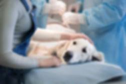 surgery_animal.jpg