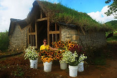 stone house green roof flowers sunflowers tuberoses