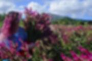 woman in a field of purple celocias hoding a bouquet