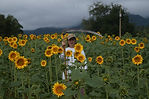 woman with a scythe in a sunflower field