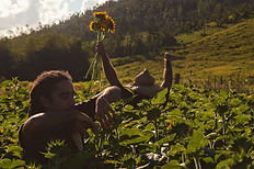 men in field of sunflowers