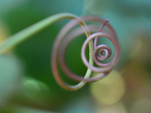 tendrilspiral.jpg