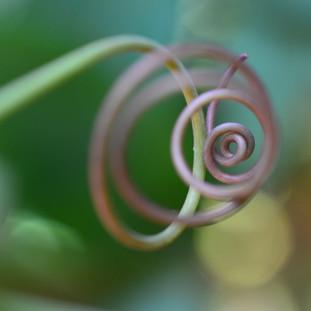 tendrilspiral