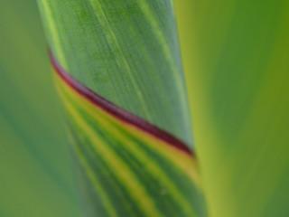 greenspiral.JPG