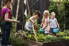 6 alimentos ideais para uma horta cuidada por crianças
