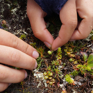 Berry Monitoring