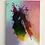 "Thumbnail: ""Colorsplash""🌈 klein"