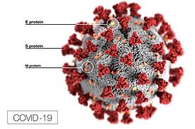 COVID-19 CDC IMAGE WIKI[EDIA 800px-2019-