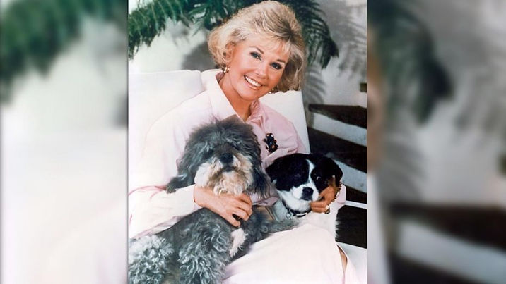 DORIS DAY ANIMAL FOUNDATION 5.jpg