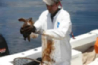 ENVIRONMENTAL CONCERNS GULF OIL SPILL.jp