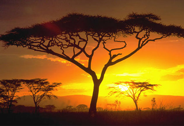 SERENGETI - BING - PRISTINE PLACES.jpg